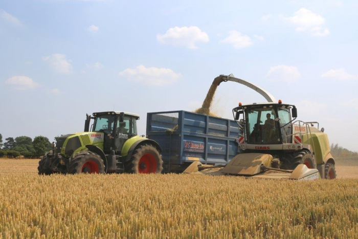 Whole crop silage 2013