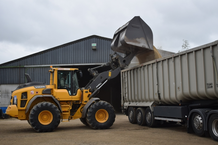 Loading spring barley into a grain lorry
