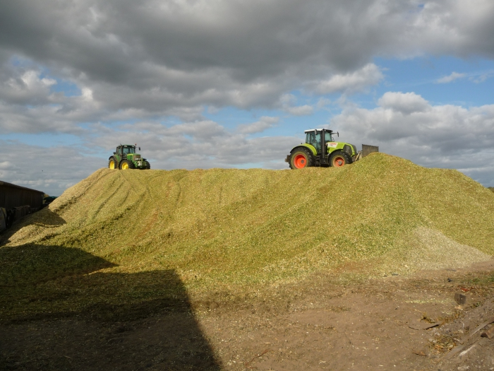 Silage pit